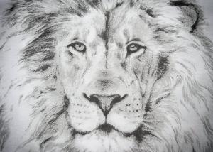 Bleistiftzeichnung Löwenkopf
